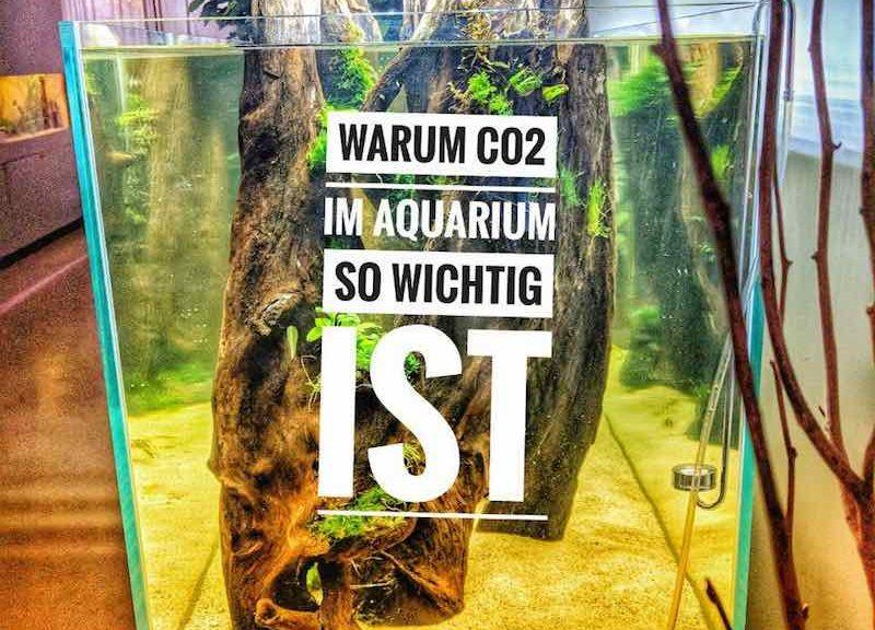 warum co2 im aquarium so wichtig ist 800x576